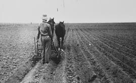 Trabajador del campo argentino